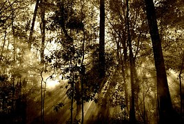 forest-67286__180